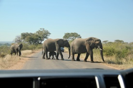 baby elephant crossing