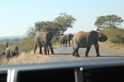 This elephant thought we were too close