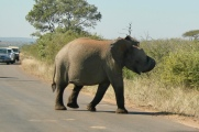 elephant with an itch
