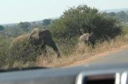 another juvenile elephant