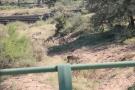 waterbucks